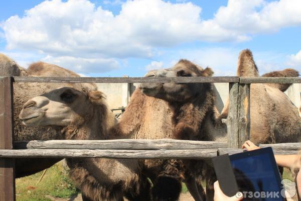 Экскурсия на страусиную ферму